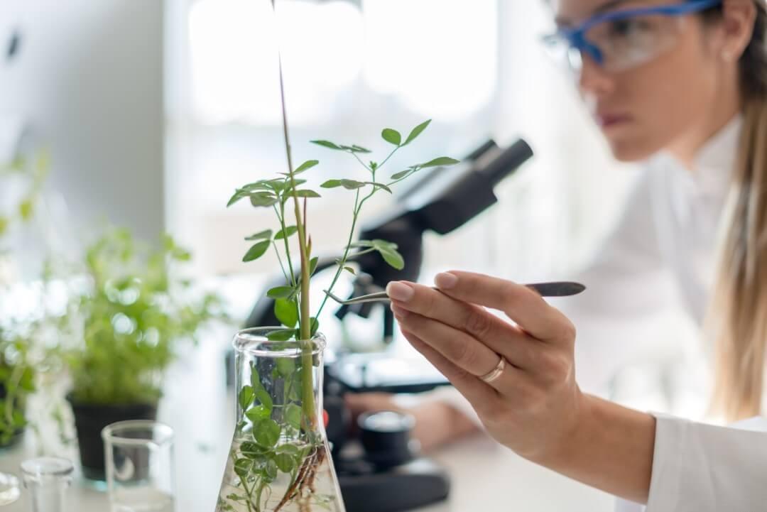 Eine Frau im Kittel untersucht eine Pflanze
