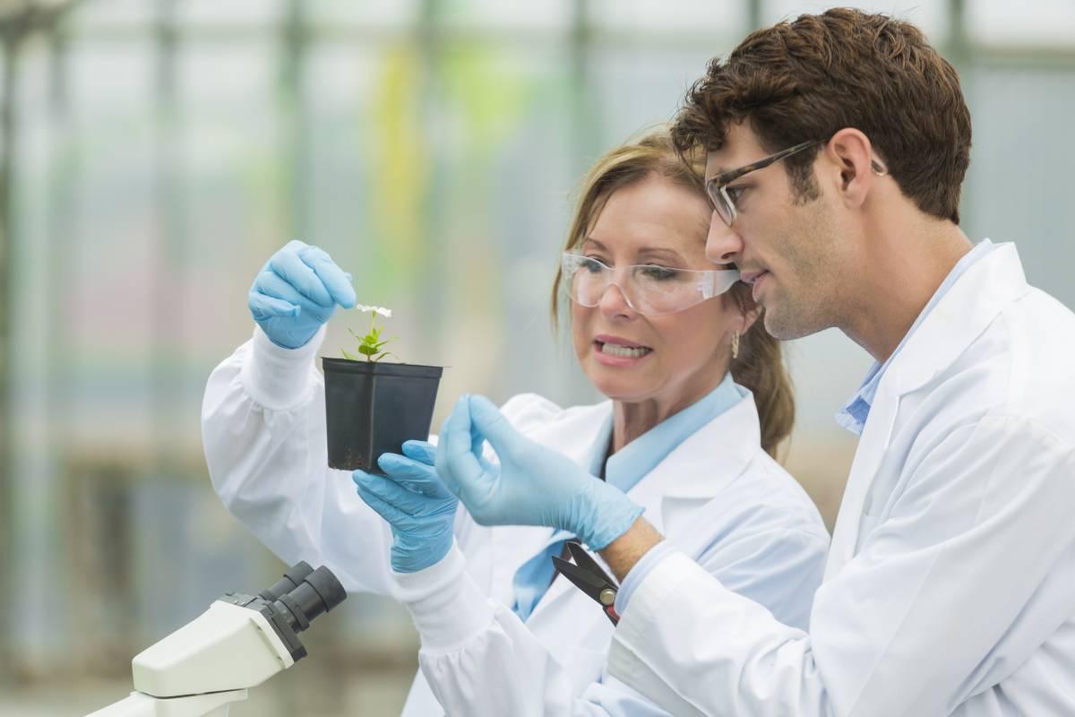 Forscher untersuchen gemeinsam eine Pflanze